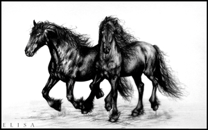 Friesians (for sale : 20e) by Twist-Again