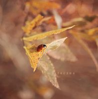 On the leaf by marteczna