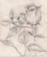 Pink Roses in pencil by amber-greggy