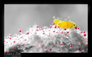 Flower AND Louse by HamidSHS