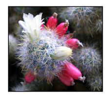 Succulent Blossom by comino69