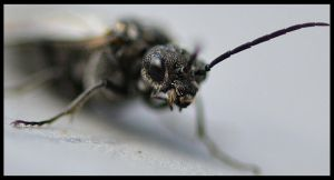 Insect Of The Underworld2 by FrankAndCarySTOCK