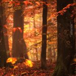 Roter Schleier by Mar-jus