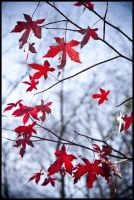 Late Fall 10 by Tjpower11