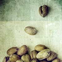 nuts dancing by pauart