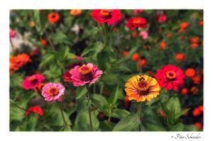 Flowers 62 by Phototubby