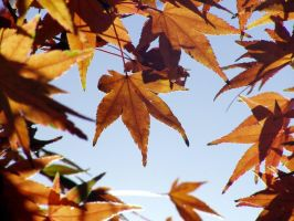Autumn Set 5.1 by Foto-Shadow
