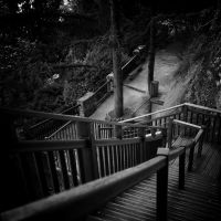Stairs into the woods by burzinski