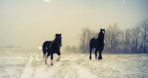 Work Horses by PhotoAlterations