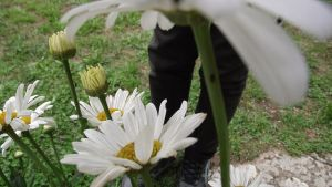 Feet in flowers by RaspberryHunter