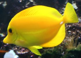Gage Park Zoo 9 - Fish by Falln-Stock