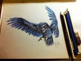 blue owl by bensy123