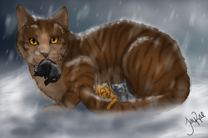 Leafpool's Quest by xxMoonwish