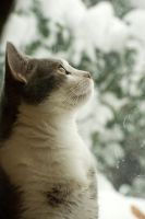 O-ren Looking at the snow by SLHudgensPhoto