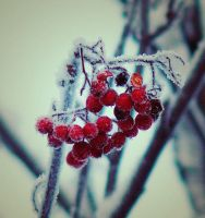 frozen red by ilonette888
