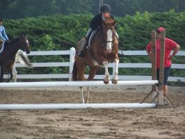 Horse show stock 6 by shush-stock
