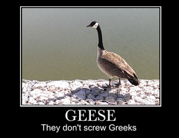 Geese and Greeks by katiejo911
