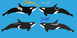 Orca Adoptables Set 2- CLOSED by GypsySkye