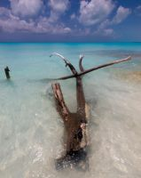 Swimming on the beach by peterpateman