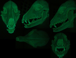 Glow in the dark skull k9 by DreamVisionCreations