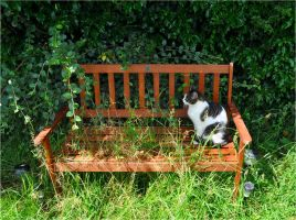 The Cat on the Bench 2 by Forestina-Fotos