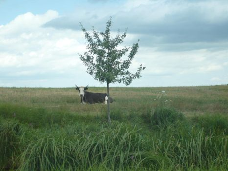 Tree and Cows by ThinkFrog