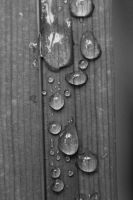 black and white water drops by Jhickling