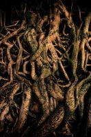 Confused roots by Tenbult