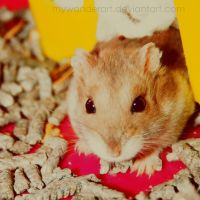Piticli The Hamster by mywonderart