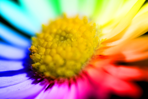 Macro Flower Rainbow Mix v2 by exxodium