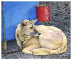 Juneau Dog by Idess
