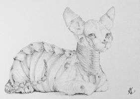 Amored Cat by shelaghcully