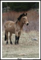 Wild Horse or Maybe a Mule by hunter1828