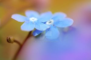 Blue flowers by V-i-k-k-i