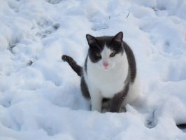 Lio in the snow by Saphirell