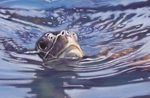 The Turtle -detail PASTEL by AstridBruning