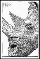 Rhino Head: Preview Sketch by giadrosich