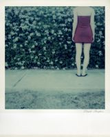 SX-70 polaroid 92 of 100 by lloydhughes