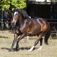 STOCK - 2014 Sep Tolly-70 by fillyrox