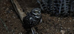 A Wee Owl by Phishmonger