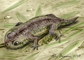 Gerobatrachus by NTamura