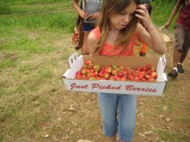Just Picked berries by awesome-shrimp