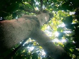 Tree by zohreh1991