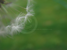 Dandelion by xxFiveWords