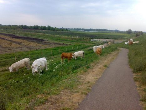 Cycling to Ely 2 by Carnivius