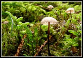 down in the moss... by jamesboy