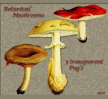 Botanical mushrooms by libidules