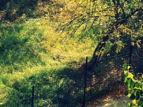 Autumn is coming.. by dulce91bellutza