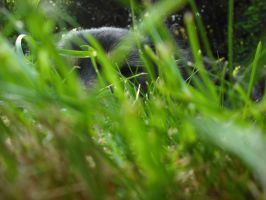 Behind the grass by Lucinda-Emma