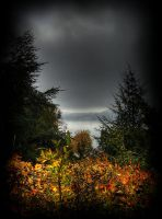 Autumn View I by PsychoBudgie
